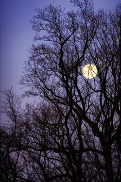 Moontree_1
